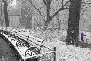 Snow Day, Central Park - New York City