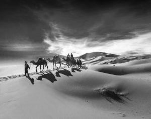 CamelDriver11x14.jpg