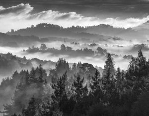 Morning Fog From Mt. Tam – Mill Valley, California 2007